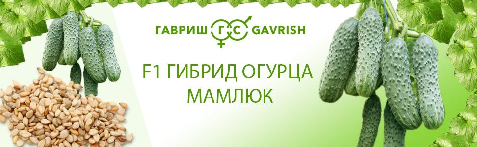 Группа компаний «Гавриш» (Gavrish)